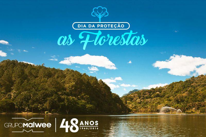 Dia de Proteção das Florestas