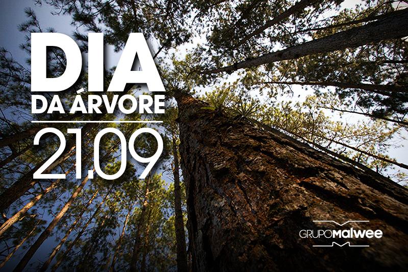 Dia da Árvore - Nada menos do que 35 mil árvores presentes no Parque Malwee!