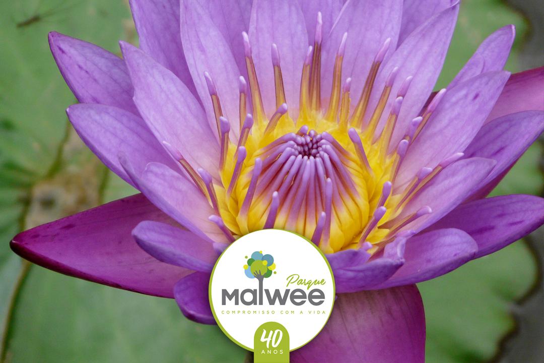 Conheça 40 curiosidades sobre o Parque Malwee